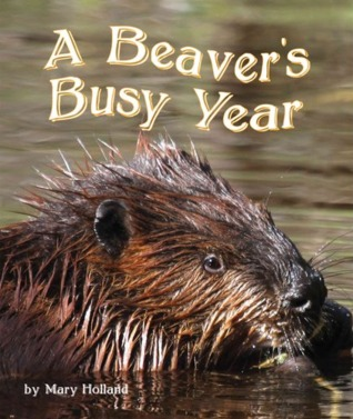A Beavers Busy Year